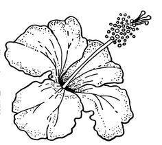 236x211 Hibiscus Drawing. How To Draw A Hibiscus Flower Step By Step Very