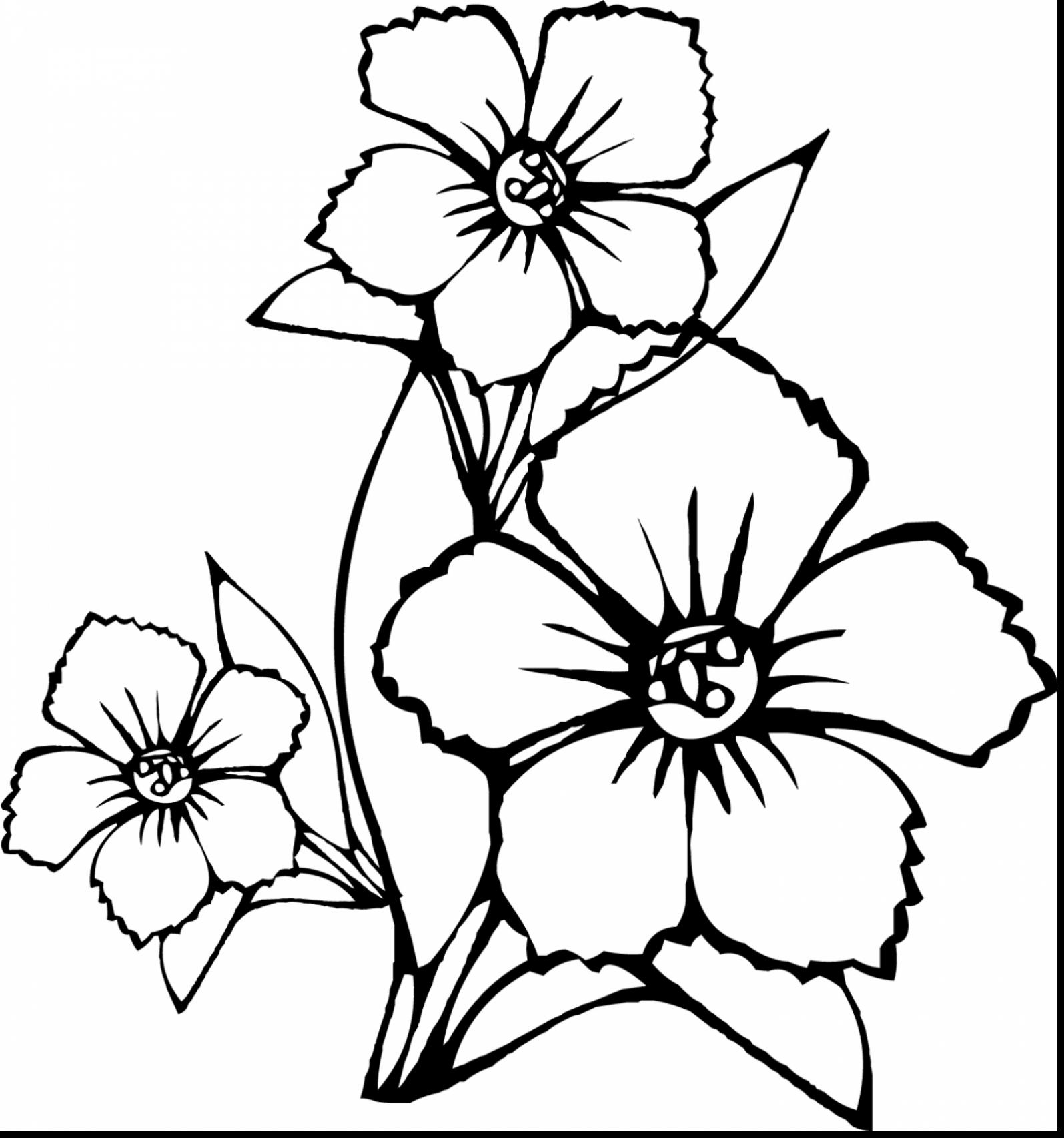 1595x1705 Wonderful How To Draw Flower Coloring Page With Hawaiian