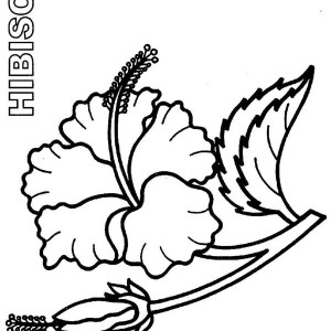 300x300 Hawaii State Flower Is Hibiscus Flower Coloring Page Color Luna