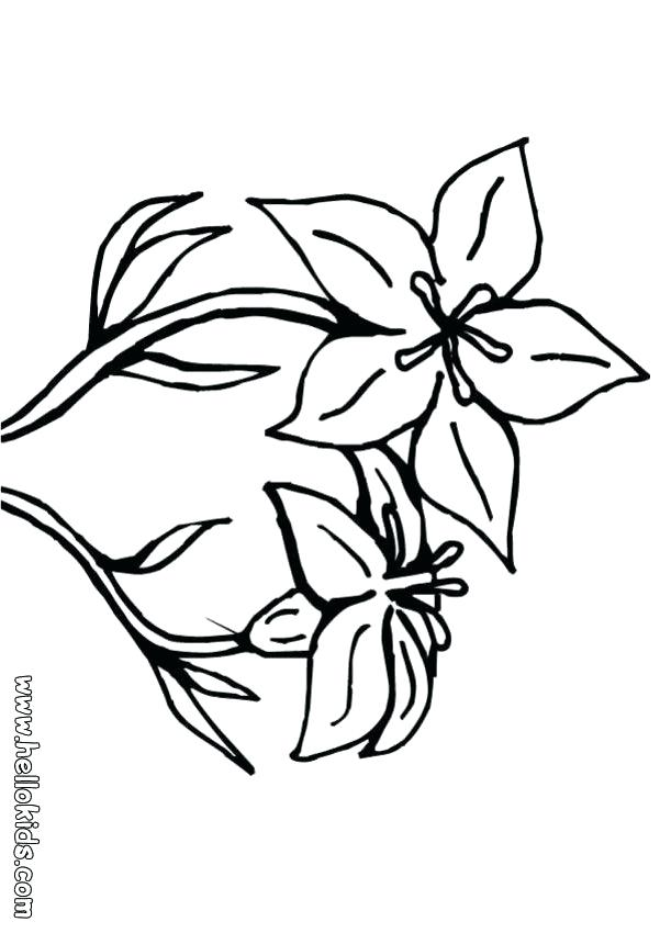 601x850 Hawaiian Flower Coloring Pages Hibiscus Tropical On Drawing Sheets