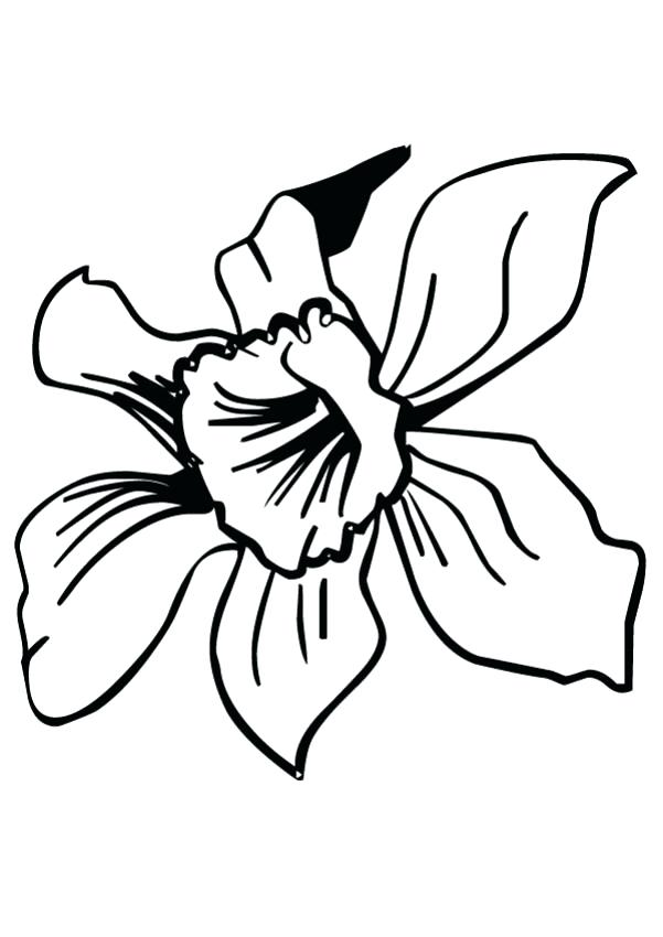 601x850 Hawaiian Flower Coloring Pages Stunning Flower Coloring Pages