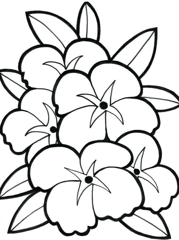 600x803 Hawaiian Flowers Coloring Pages Flower From Coloring Pages Flower