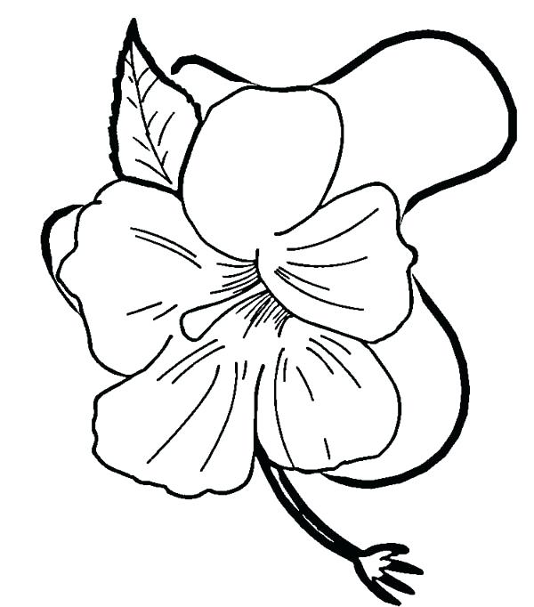 600x682 Hawaiian Flowers Coloring Pages Girl Coloring Pages Terrific Page