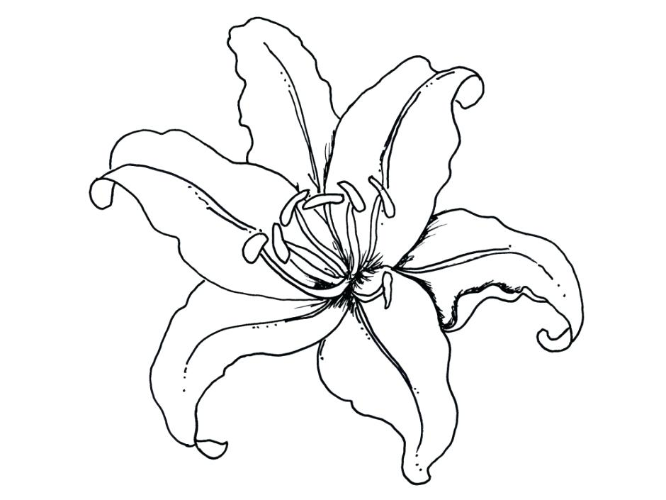 940x705 Hawaiian Flowers To Color Drawn Hibiscus Flower 1 Free Printable