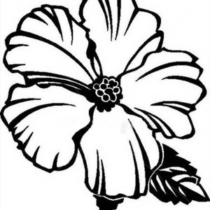 300x300 Hawaii State Flower Is Hibiscus Flower Coloring Page Hawaii State