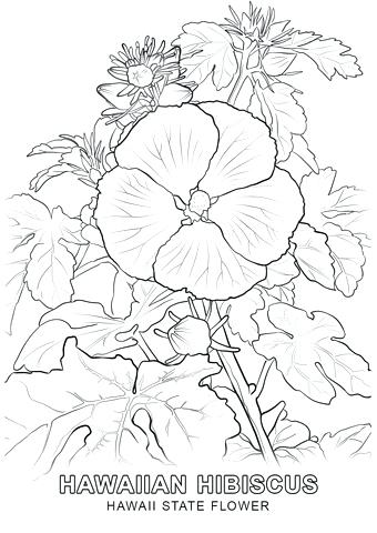 340x480 Hawaiian Flowers Coloring Pages Astonishing Flowers To Color Free