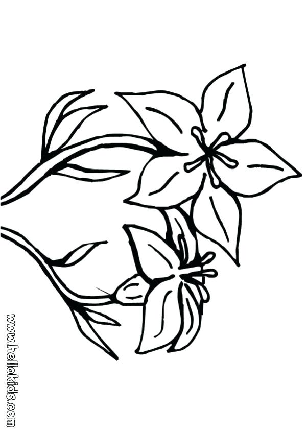 601x850 Hawaiian Flowers To Color Drawn Hibiscus Flower 1 Free Printable