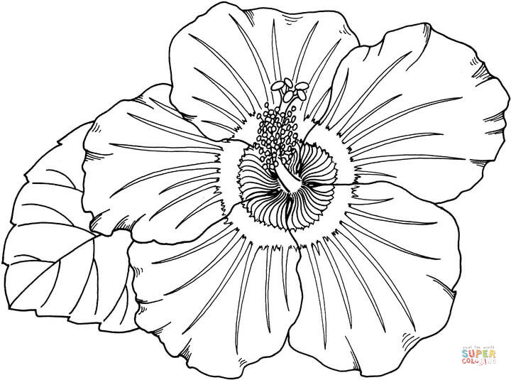 720x535 Hibiscus Coloring Page Free Printable Pages Hawaii State Flower Drawing At Getdrawings For Personal