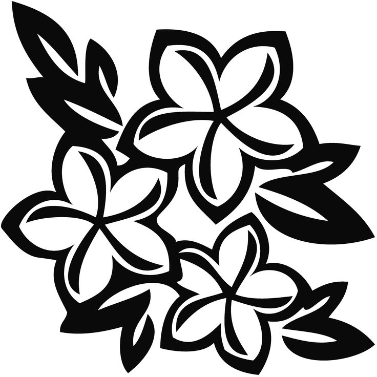 736x736 Plumeria Clipart Flower Drawing