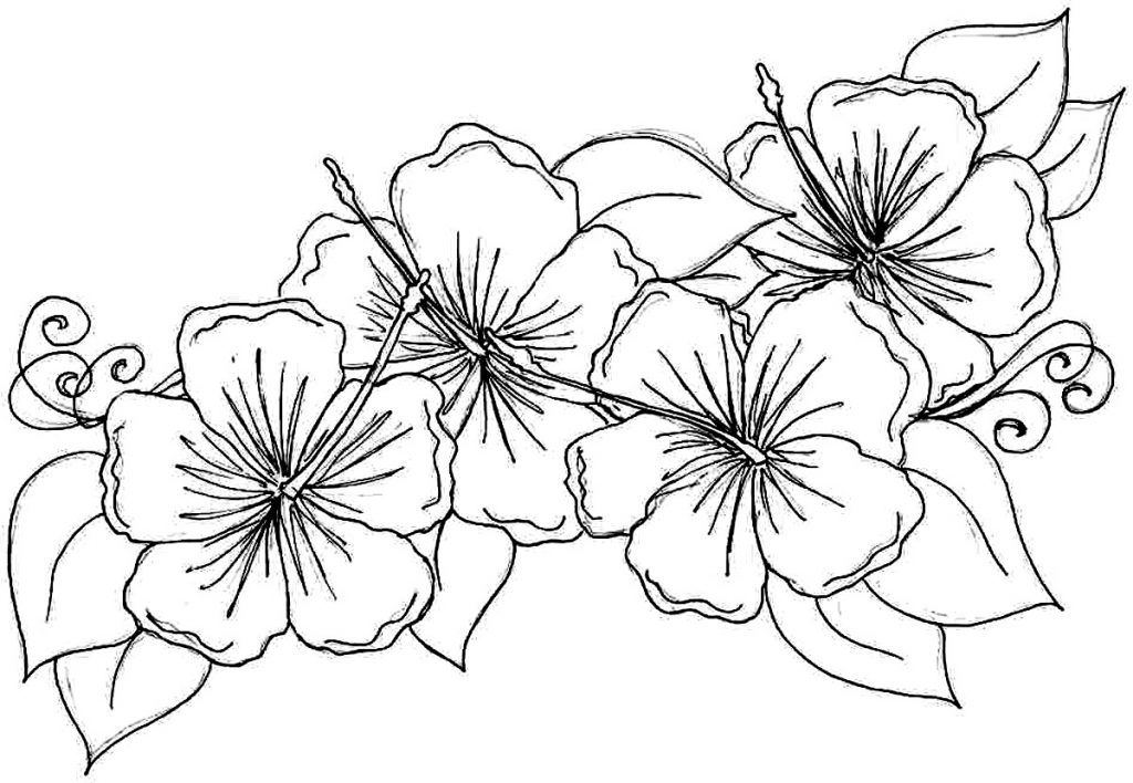1024x708 Pretty Hibiscus Coloring Page Flower Coloring Pages