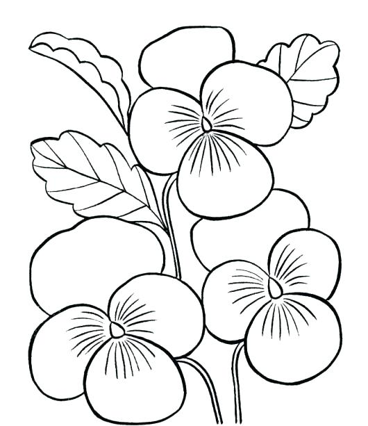 530x613 Hawaii State Bird And Flower Coloring Page