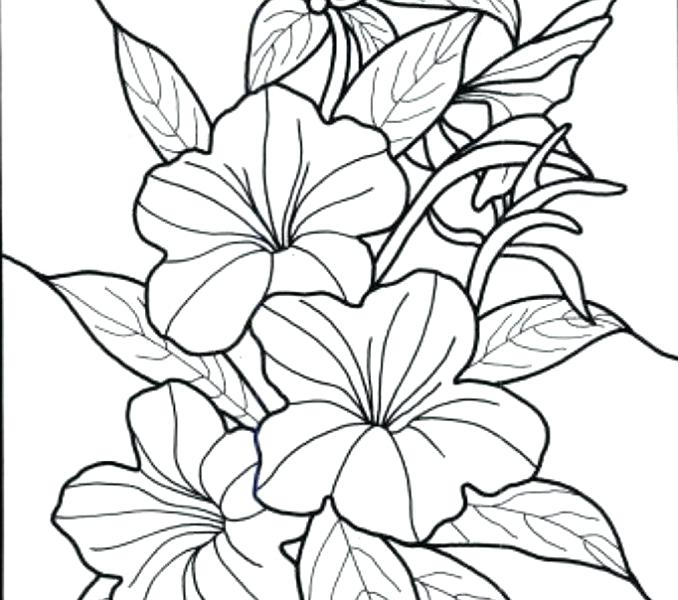 678x600 Hawaiian Flowers Coloring Pages