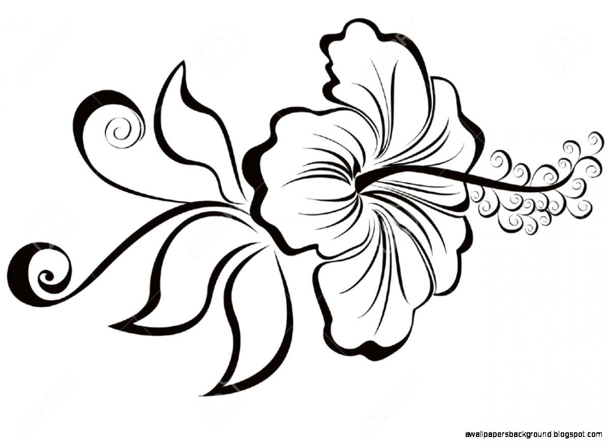 1196x871 Hawaiian Hibiscus Drawings Wallpapers Background