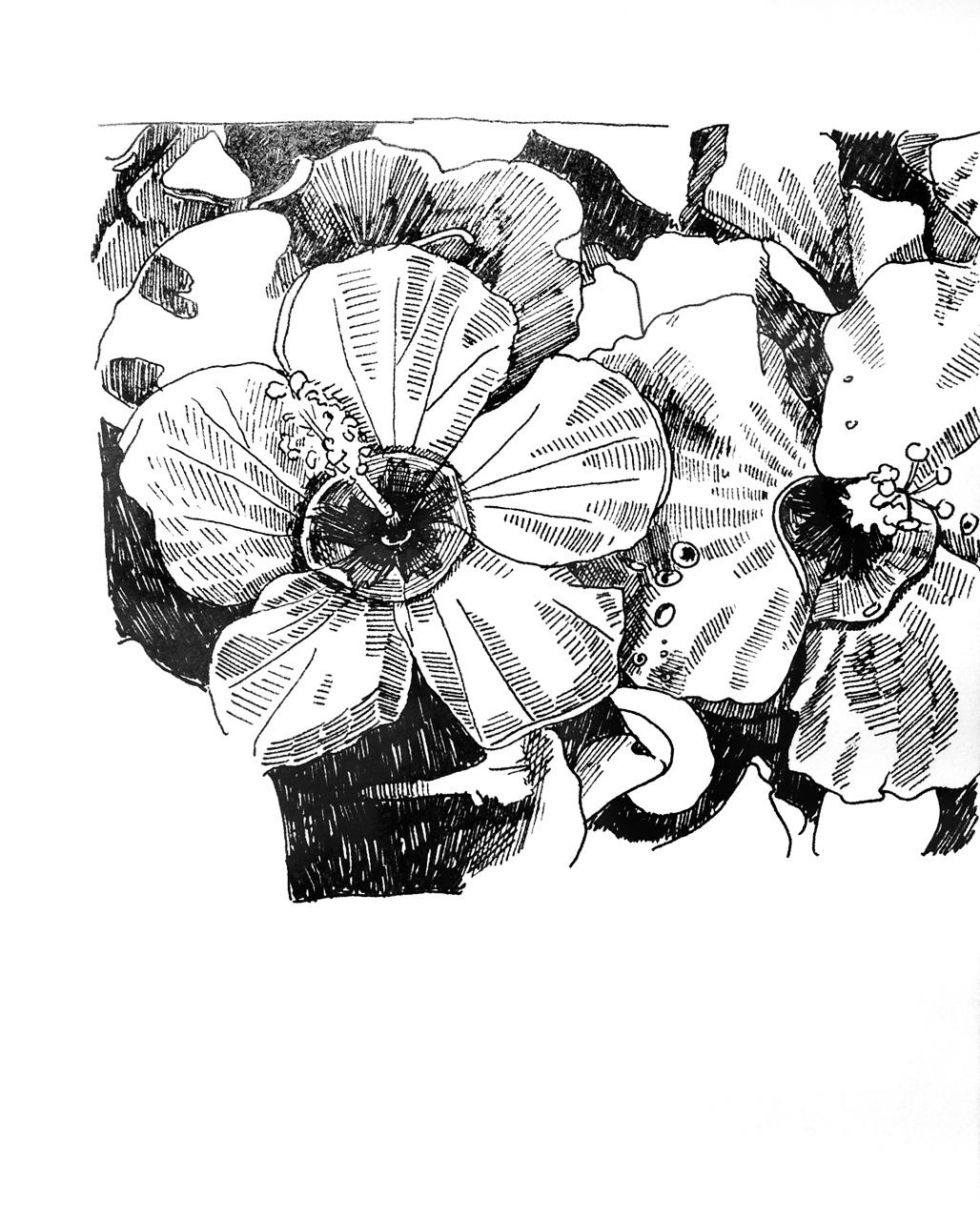 Hawaiian drawing at getdrawings free for personal use hawaiian 1028x1280 hawaiian flowers black and white drawing izmirmasajfo