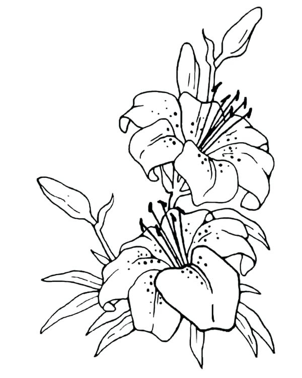 600x750 Pictures Of Flowers To Draw How To Draw A Butterfly On A Flower
