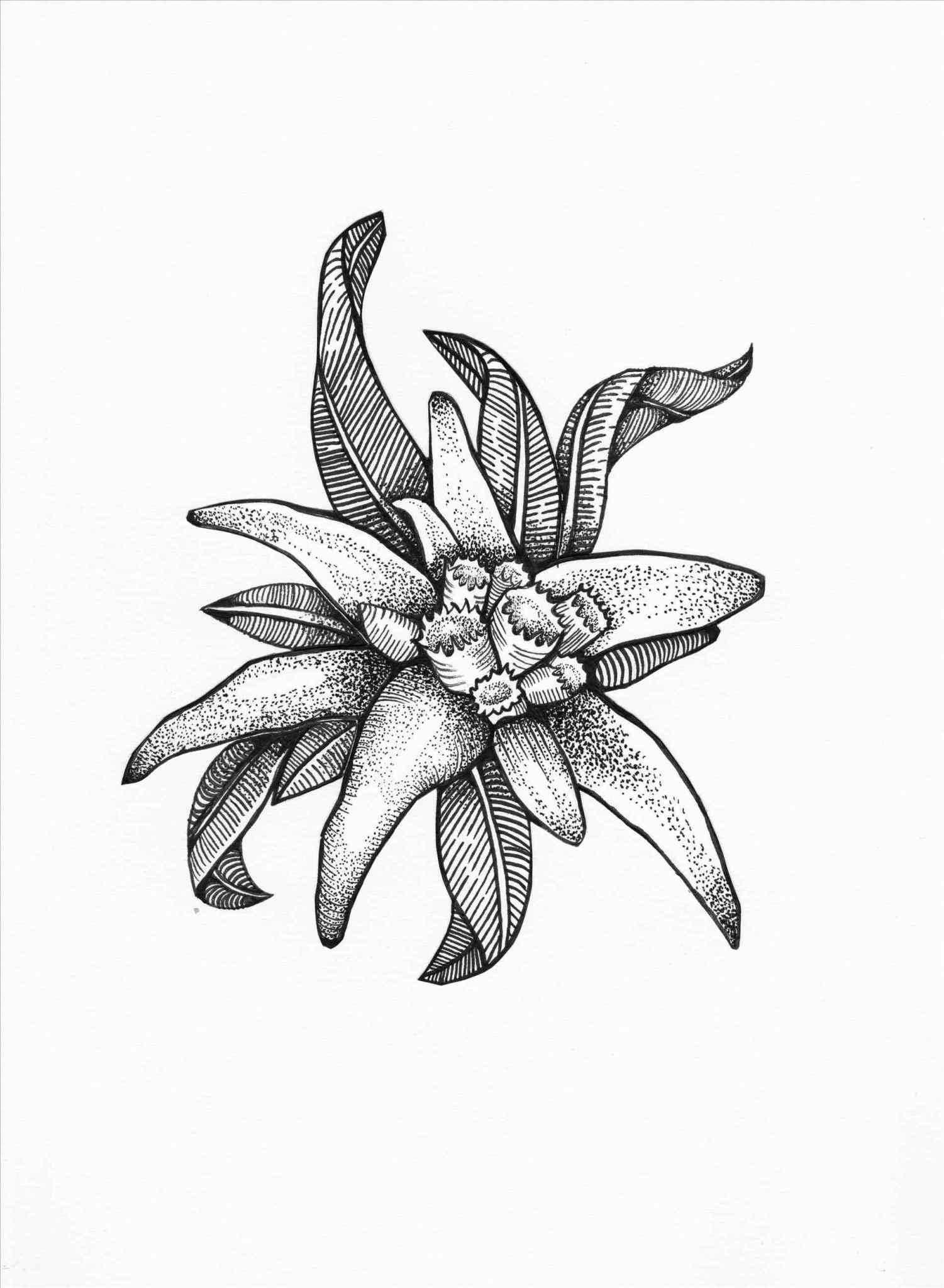 1501x2047 Design For Tattoo Plumeria Designs For Hawaiian Flowers Drawing