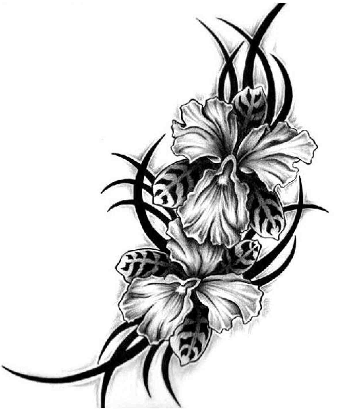 1185x1422 Hawaiian Flowers Black And White Drawing Hawaiian Flowers