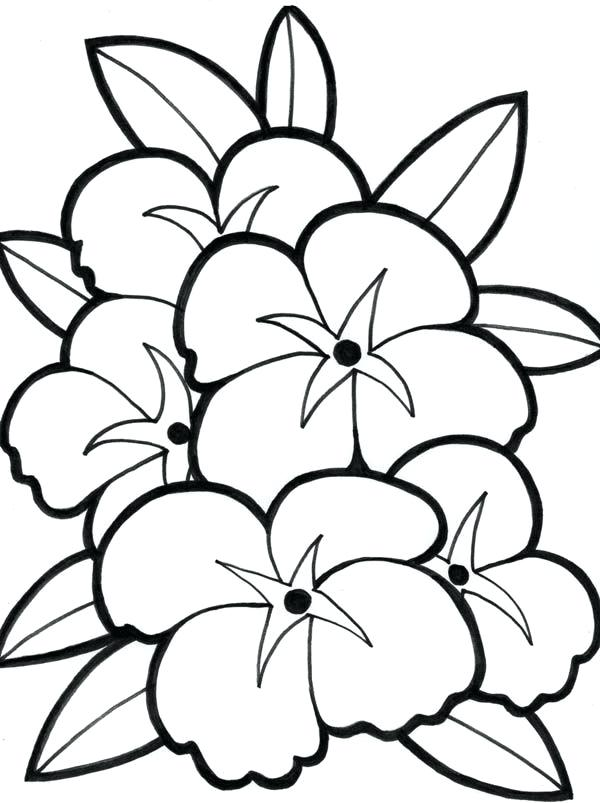 600x803 Hawaiian Flower Coloring Pages