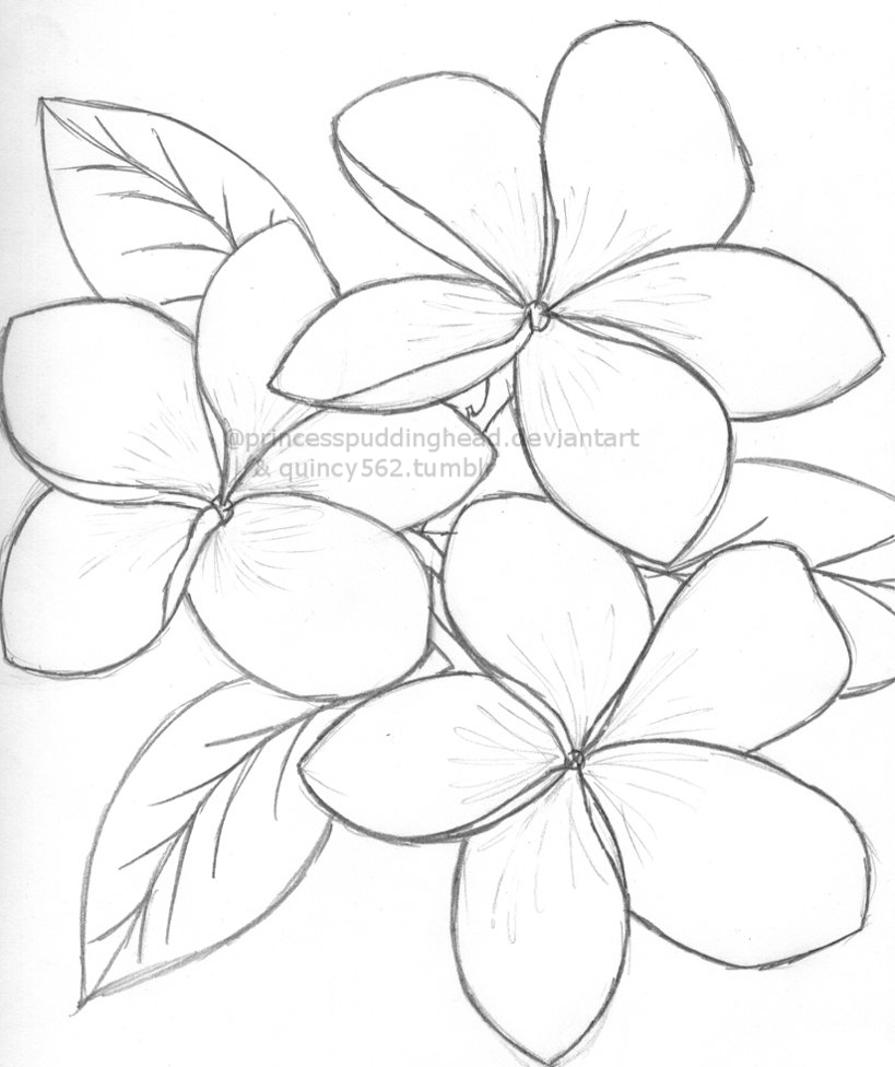 819x976 Hawaiian Flowers Drawings