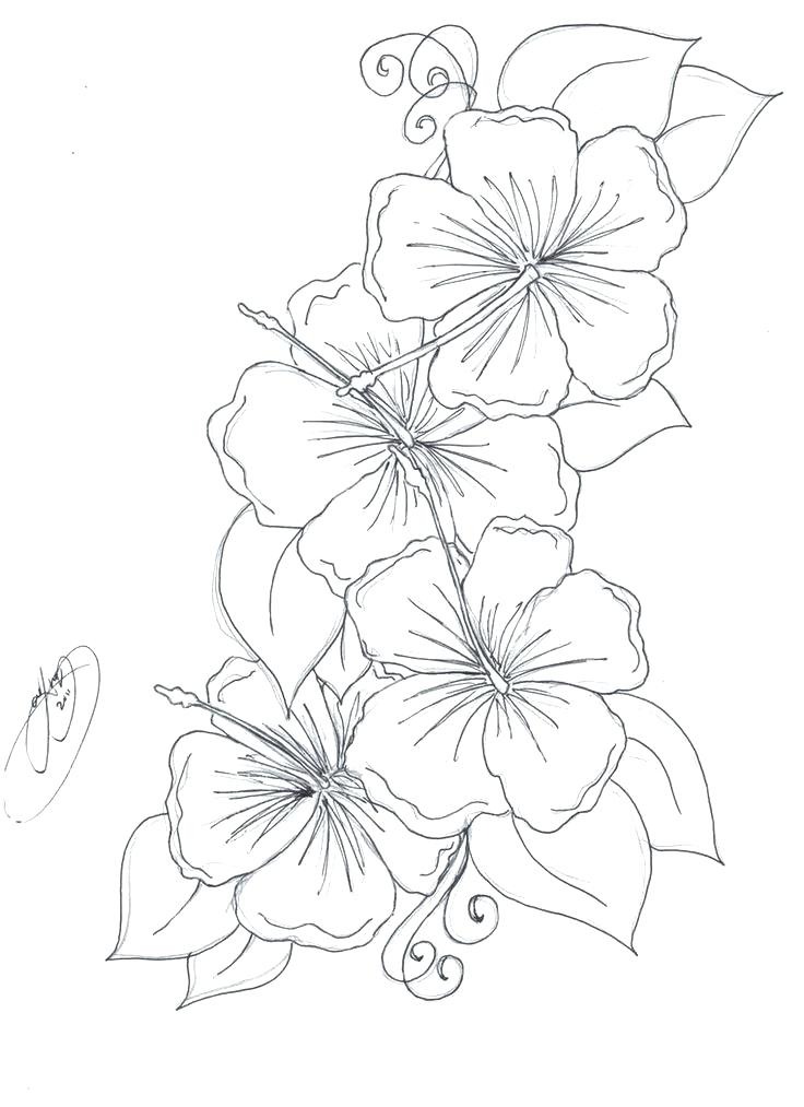 736x1013 Hawaiian Flowers To Color