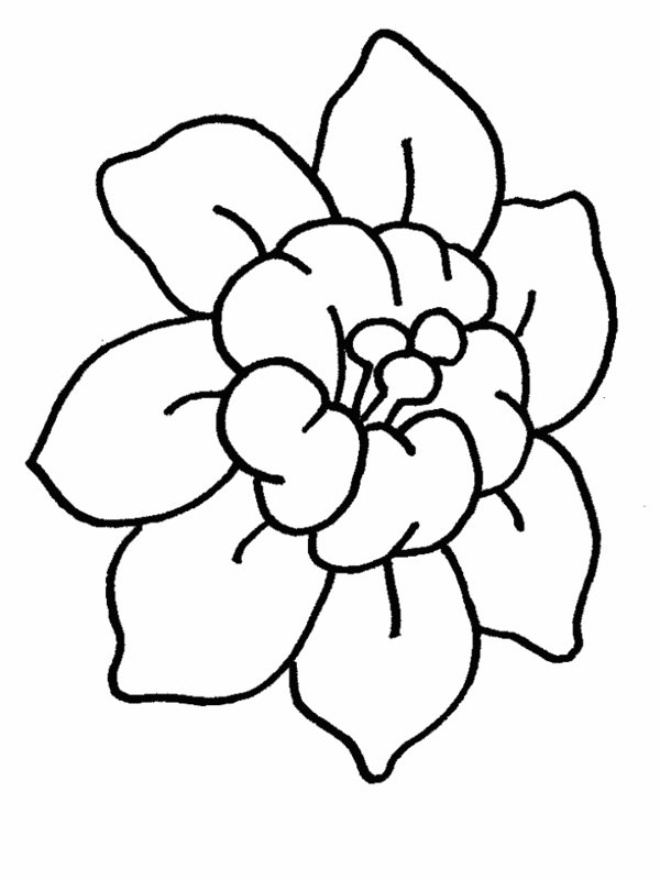 600x800 Gallery Cartoon Flower Drawings Hawaiian Flowers Drawing At Getdrawings Free For Personal Use