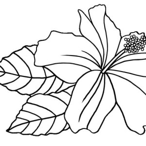 300x300 Hawaiian Flower Coloring Page By Margarito Mulierchile