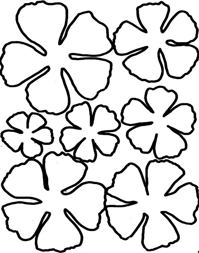 Hawaiian flowers drawing at getdrawings free for personal use 805x1024 hawaiian flower printable free download izmirmasajfo