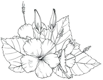 400x312 Hawaiian Flowers Coloring Pages Coloring Pages Of Flowers Free