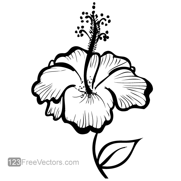 600x600 Hand Drawn Hibiscus Flower, Free Vector