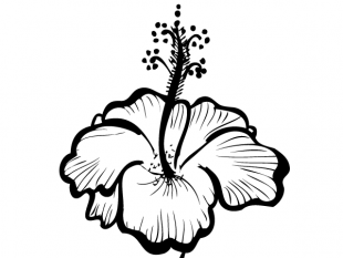 310x233 Hand Drawn Hibiscus Flower Free Vectors Ui Download