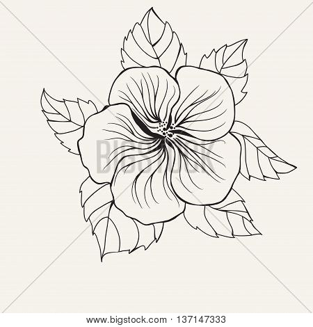 450x470 Hawaii Hibiscus Flower Leaf Vector Amp Photo Bigstock