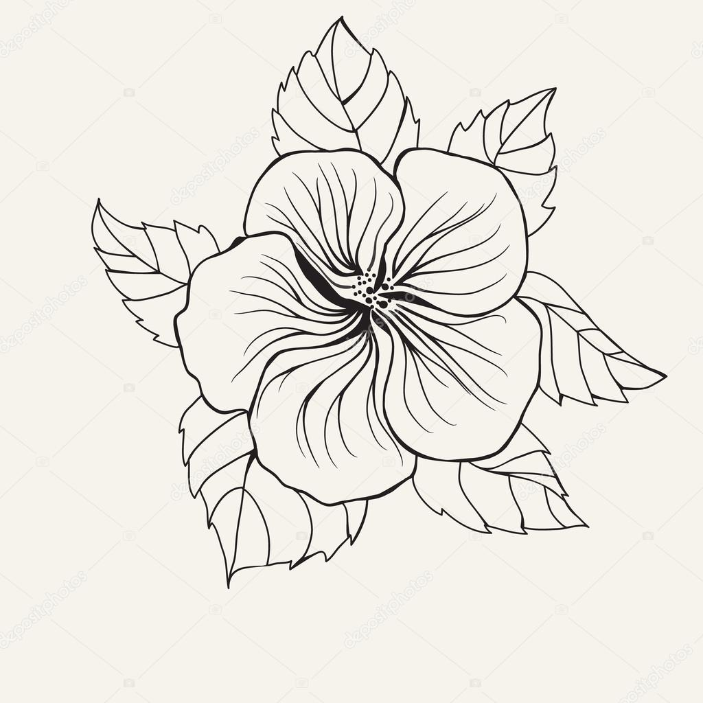 1024x1024 Hawaii Hibiscus Flower, Leaf For Coloring Book Page For Adult