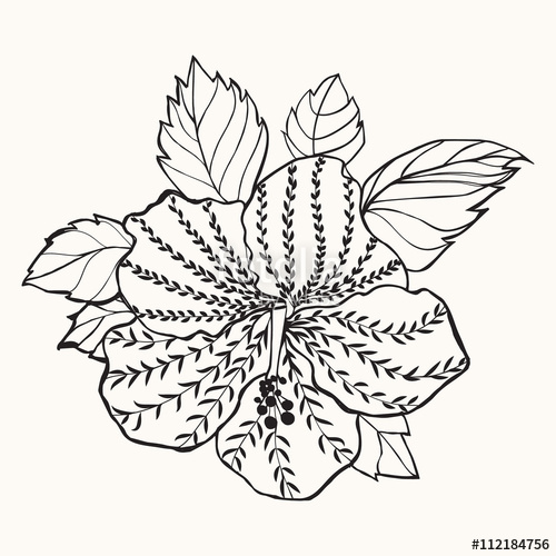 500x500 Hawaii Hibiscus Flower, Leaf Illustration Stock Image And Royalty