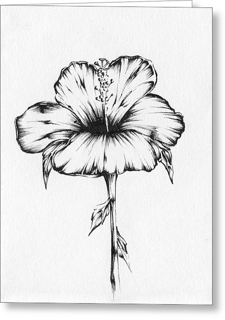455x646 Hibiscus Drawing By Christopher Lem