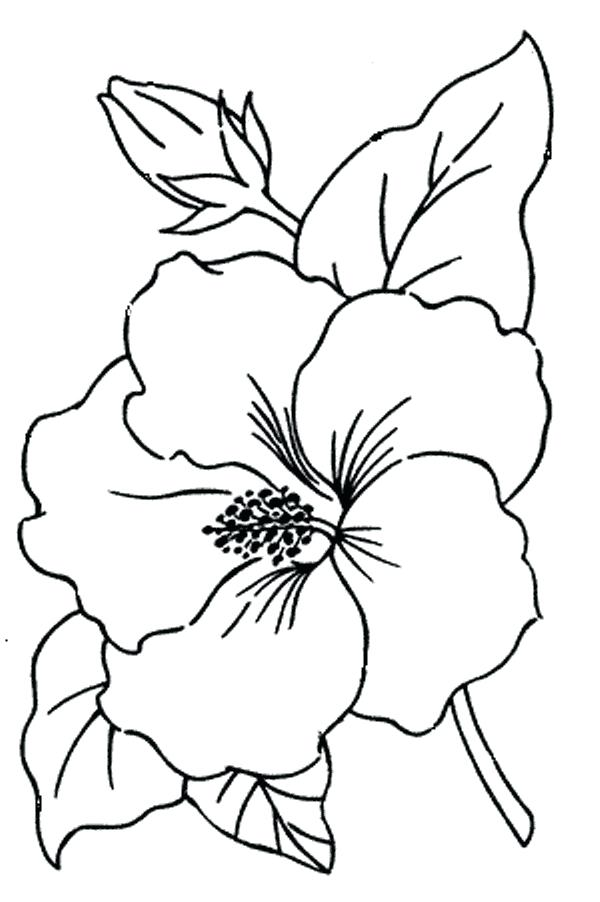 600x902 Hibiscus Flower Coloring Pages Hub Free Embroidery Pattern