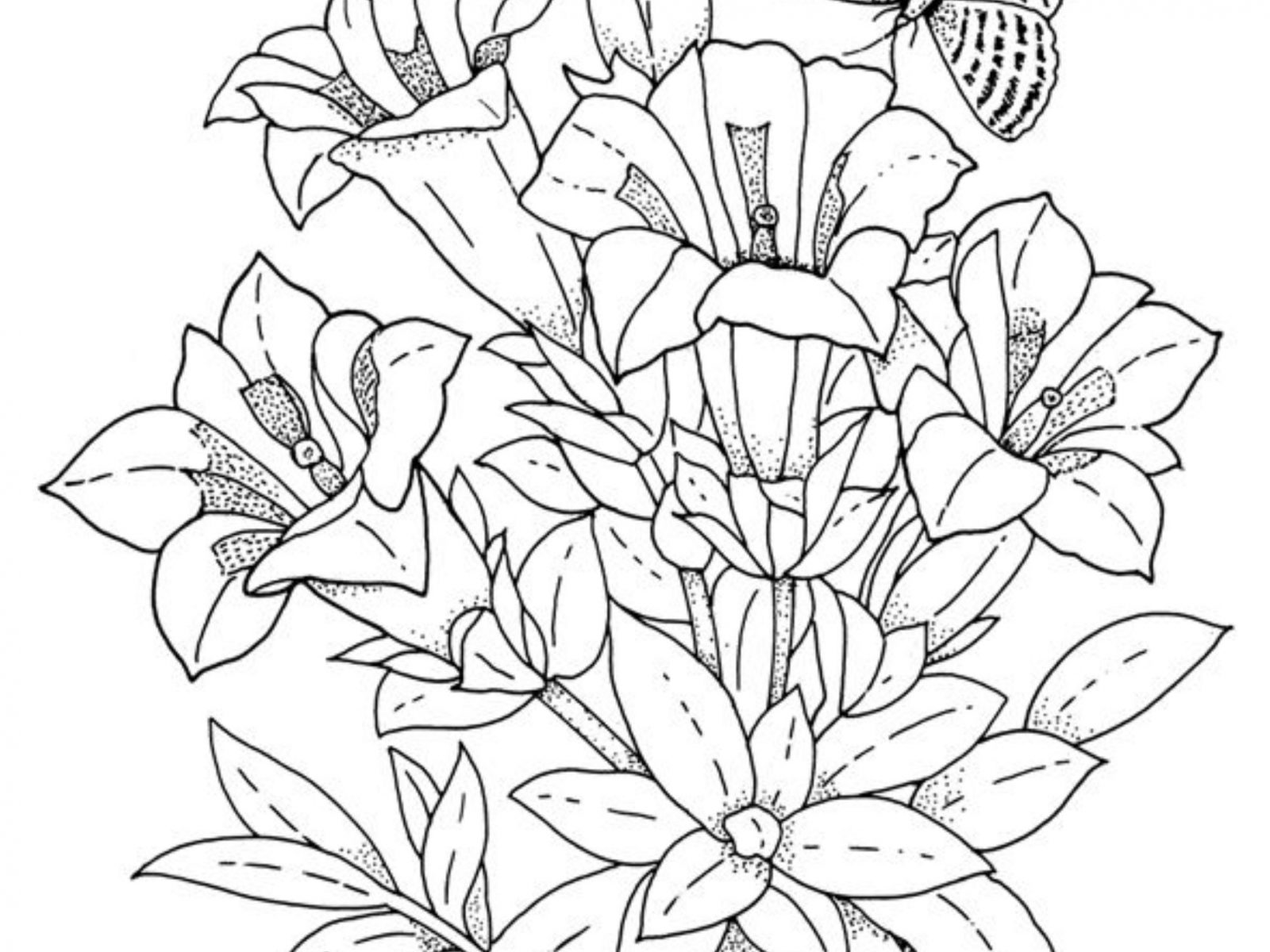 1600x1200 Hibiscus Flowers Coloring Pages For Kids To Print Flower Page