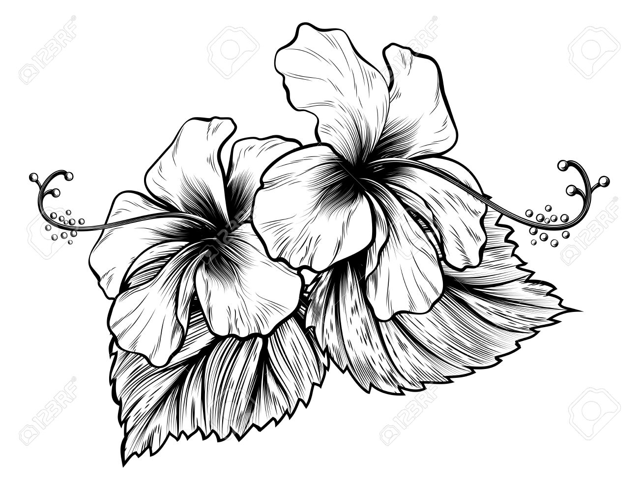 1300x996 Hibiscus Flowers In A Vintage Woodcut Engraved Etching Style