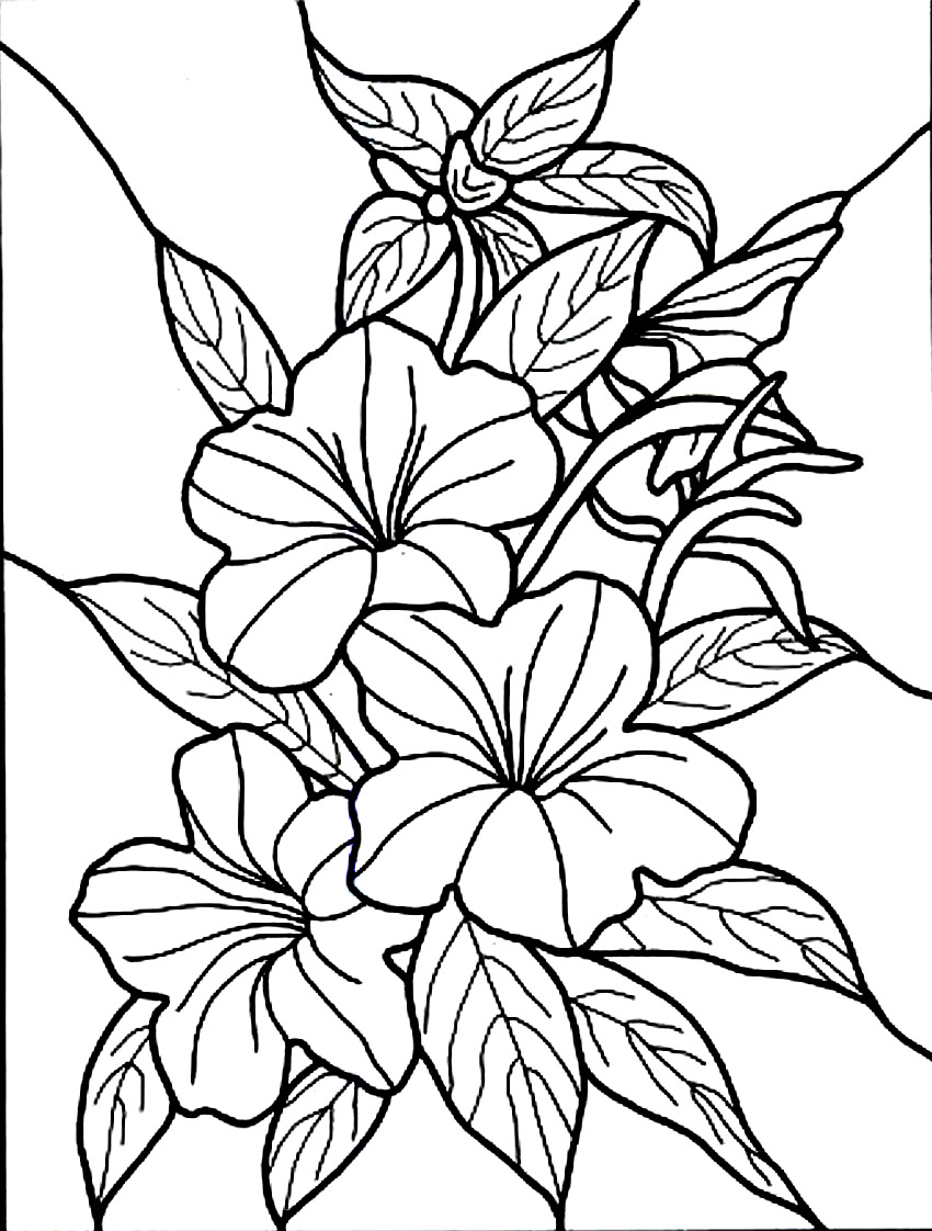 850x1122 Hibiscus With Flowers Coloring Book Colorful Flowers