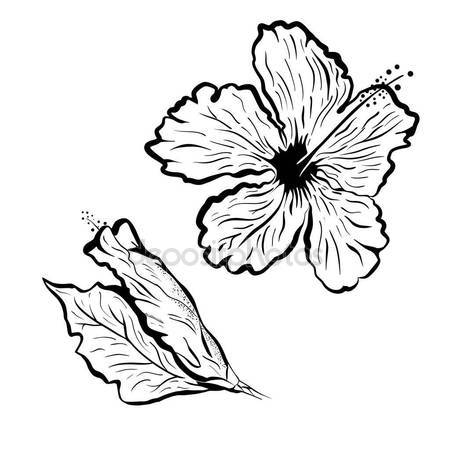450x450 Hibiscus Flower In Tattoo Style. Black And White, Graphic Tropical