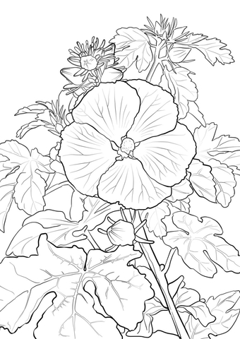340x480 Pua Aloalo Or Hawaiian Hibiscus Coloring Page Free Printable