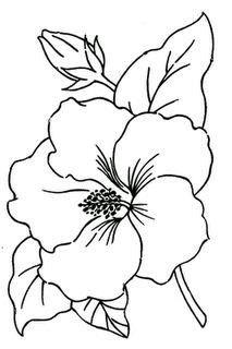 213x320 Receta Para La Conserva De Jamaica O Hibiscus Recipe