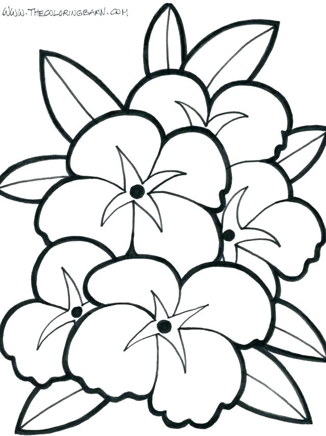 640x856 Hibiscus Coloring Page Synthesis.site
