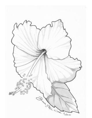 319x408 Hibiscus Drawing