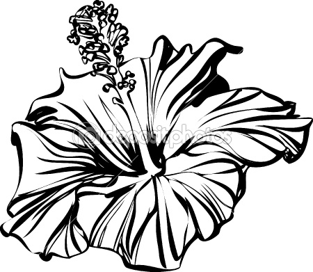 450x391 Hibiscus Outline Flowers