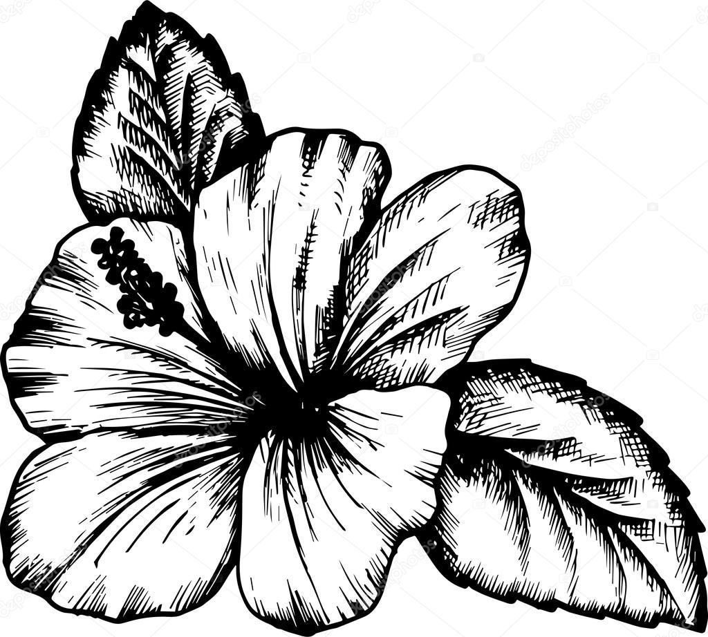 1024x922 Vector Hibiscus Flower Stock Vector Cat Arch Angel