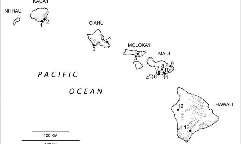 800x480 Of Extinct Bat Doubles Diversity Of Native Hawaiian Land Mammals