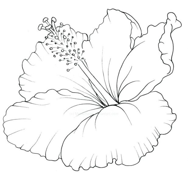 618x568 Coloring Pages Hawaiian Coloring Pages Pictures Hawaiian Lei