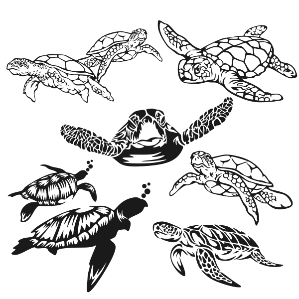 Hawaiian Sea Turtle Drawing at GetDrawings | Free download