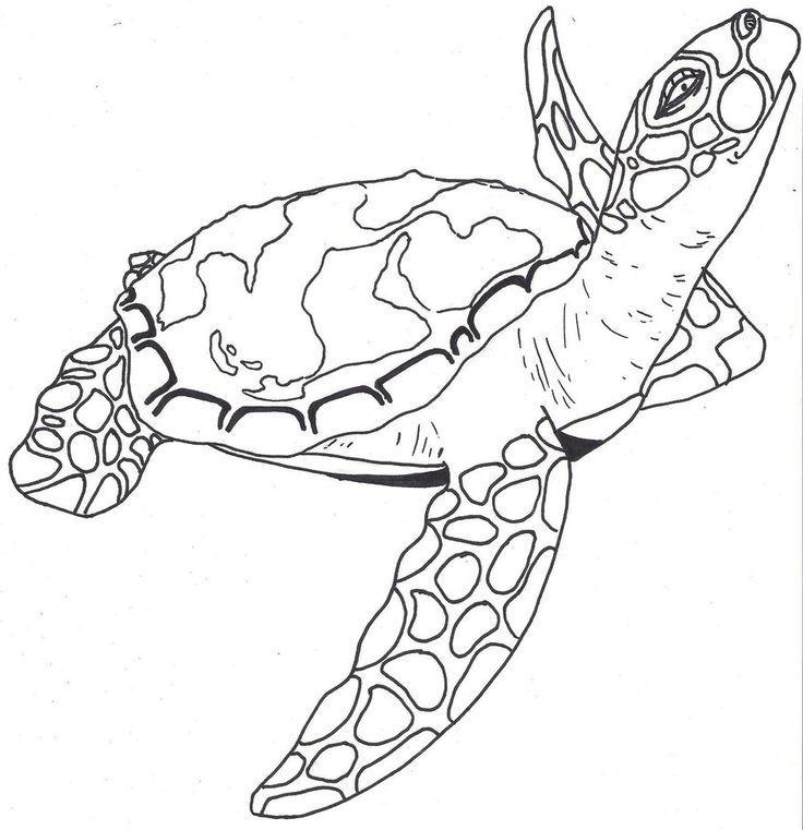 736x761 Sea Turtle Outline