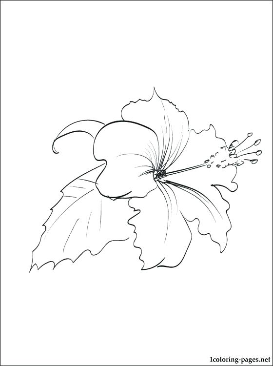 560x750 Hawaii Flower Coloring Pages To Print L